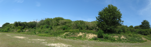 South facing bank in the Quarry, July 2015